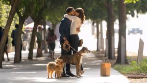 Dog Days: recensione