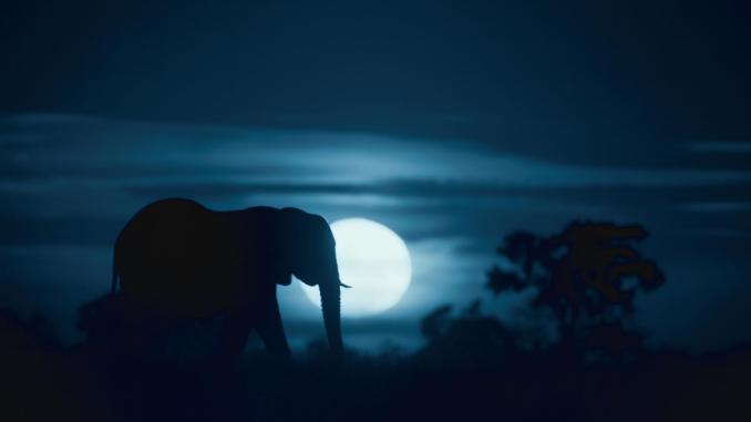 Notte sul pianeta Terra di Netflix